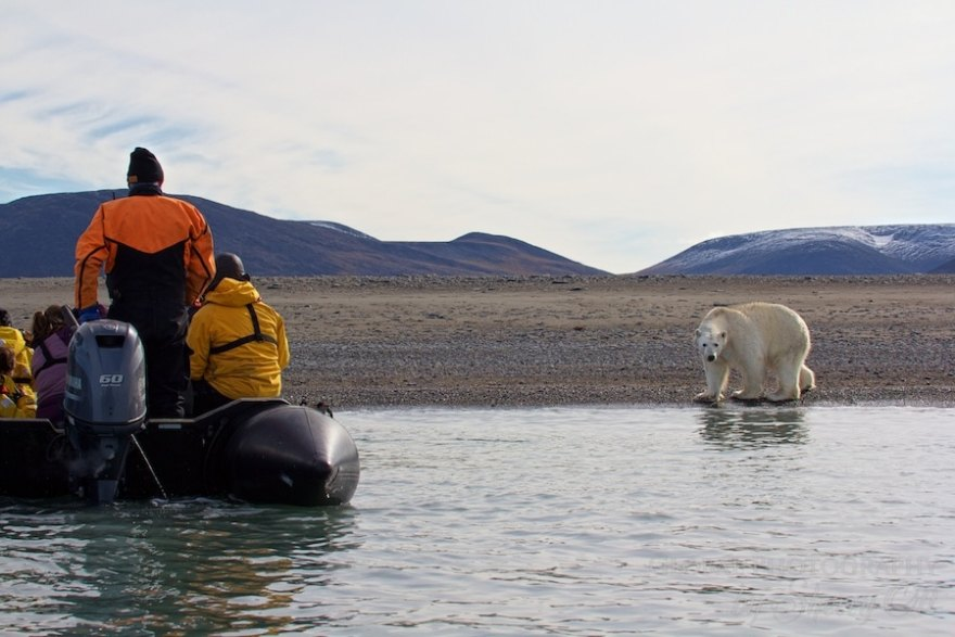 animals in the arctic