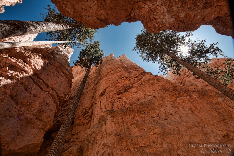 Bryce National Park Wall Street