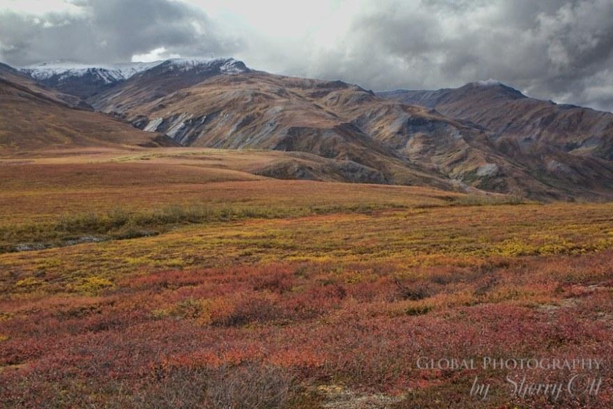 Dalton Highway tundra fall colors