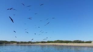 Sea of Cortez animals 2