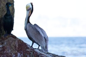 Sea of Cortez animals 7