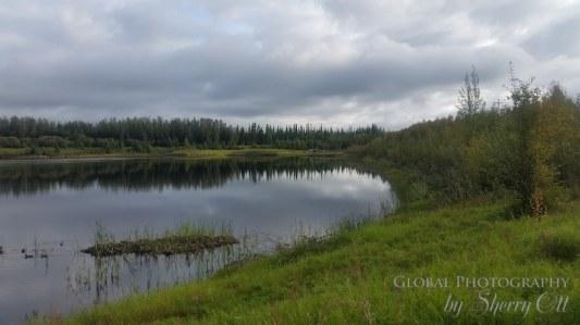 things to do in Fairbanks wedgewood wildlife sanctuary