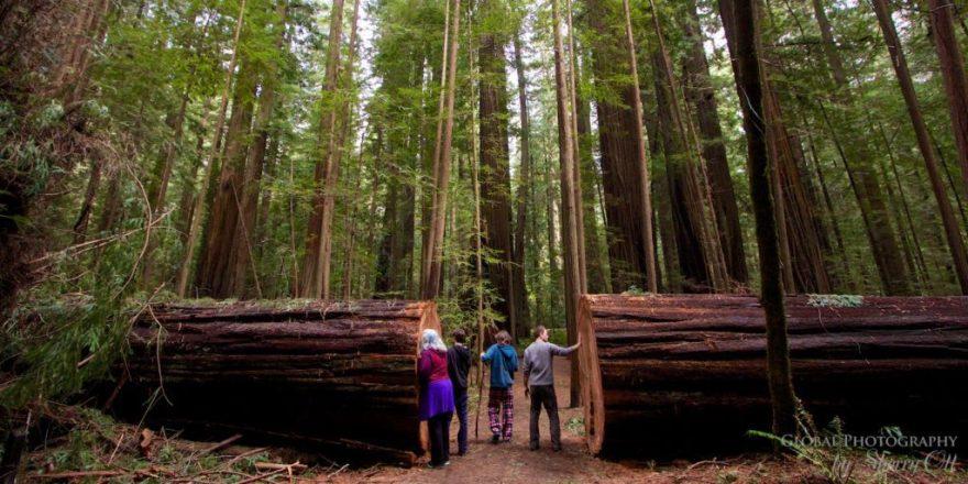 forest bathing redwoods national park