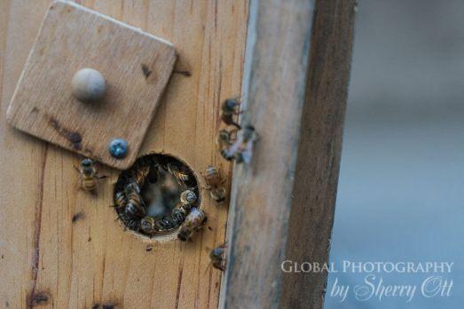 bee colony philadelphia hotel