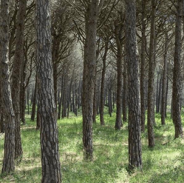 cork tree costa brava