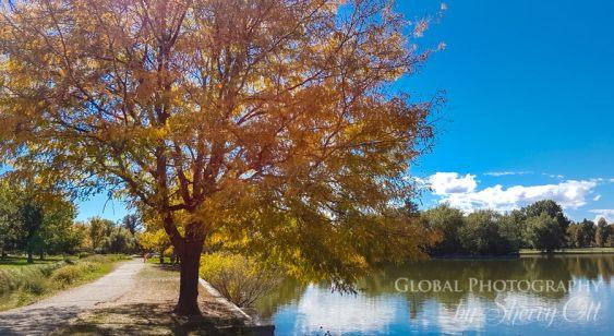 Denver fall color