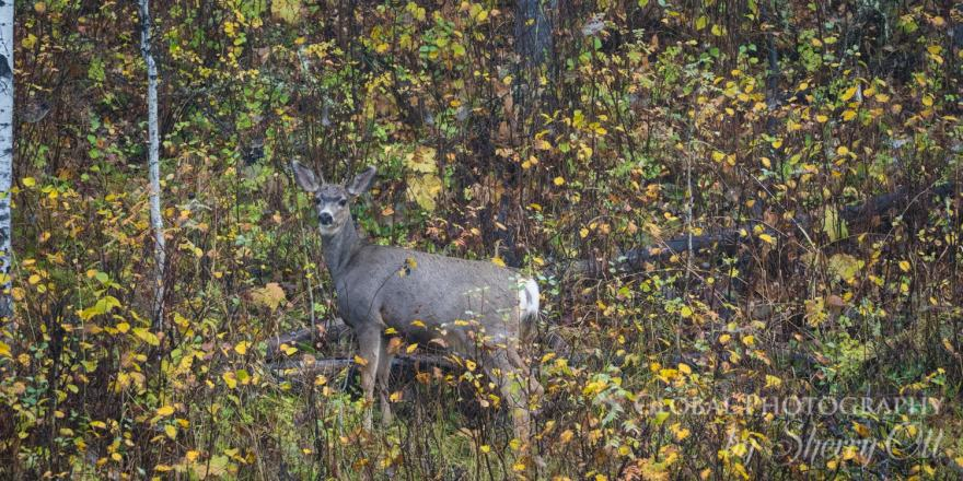 fall photography wildlife