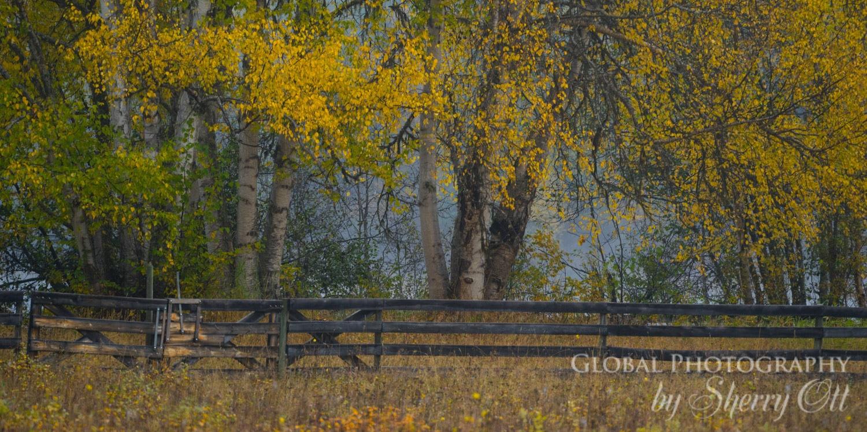 Fall Tree photography