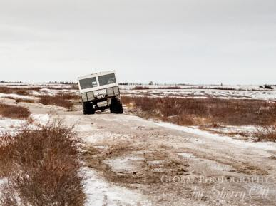 Tundra buggy polar safari