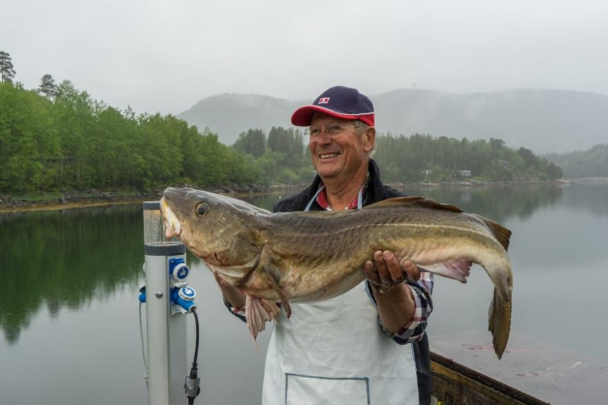 Norway Cod Fishing Romsdals Fjord