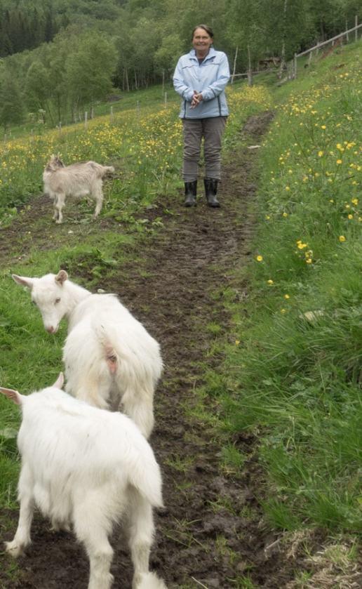 Norddal goat whisperer