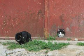 letting go cats around the world-