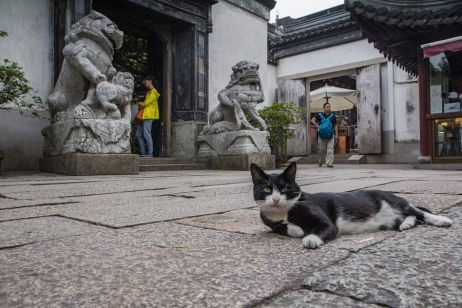 letting go cats around the world-81