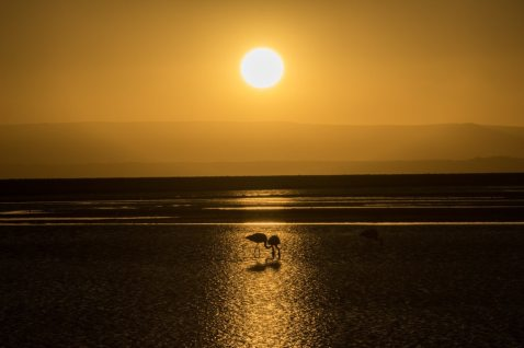 Chaxa Lake Atacama desert tours