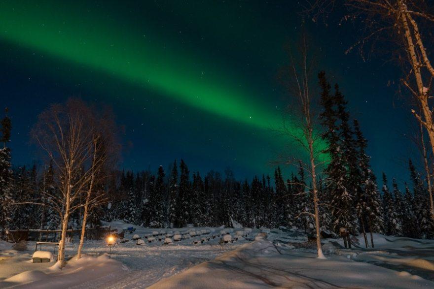 Fairbanks northern lights tour dog sledding