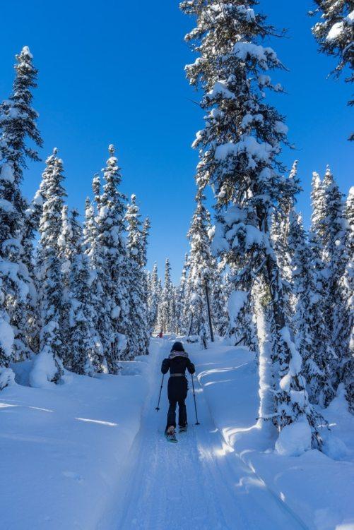 Fairbanks Alaska winter Black Rapids