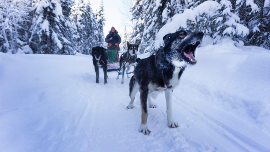 alaska dog sledding last frontier