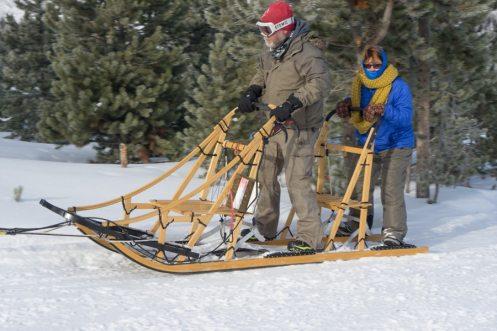 colorado dog sledding