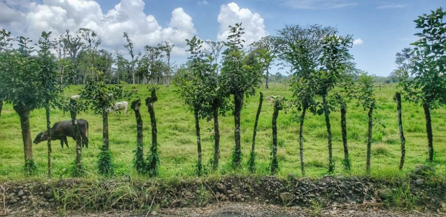 costa rica living fence