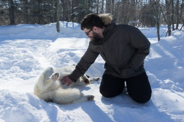 Quebec contact with wolves