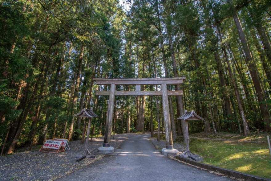 kumano kodo hike trees