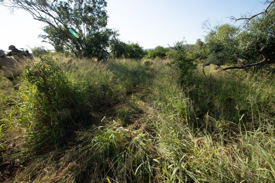 safari by foot
