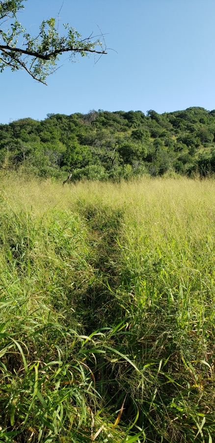 animal tracking path