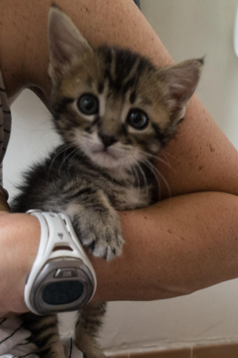 foster kittens must be 2 pounds to adopt