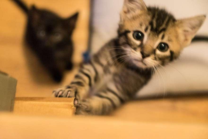 inquisitive kitten