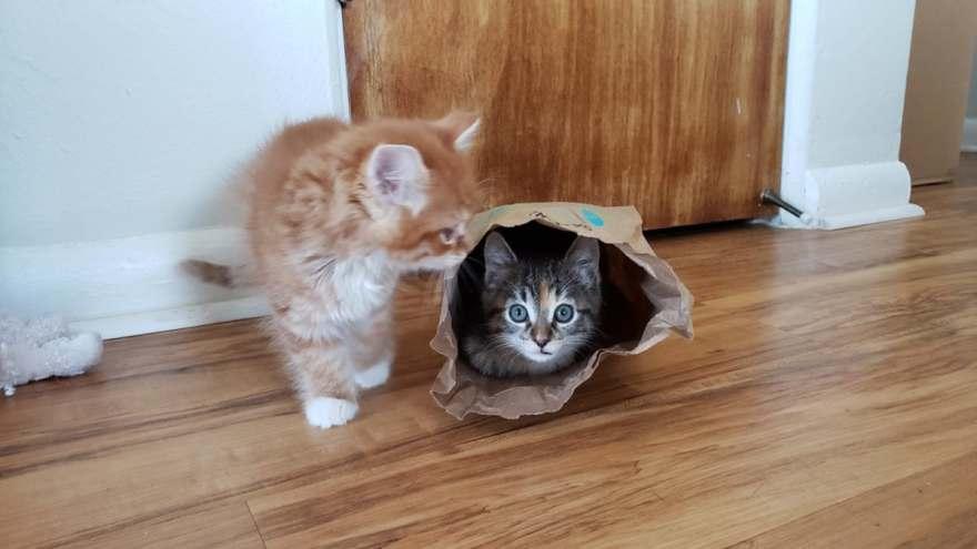 kitten in bag