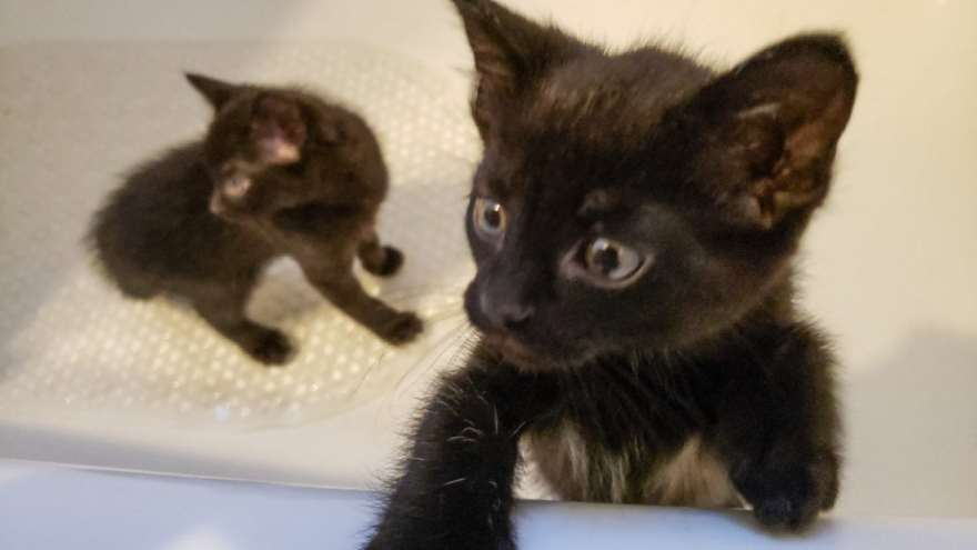 Kittens stuck in the bathtub