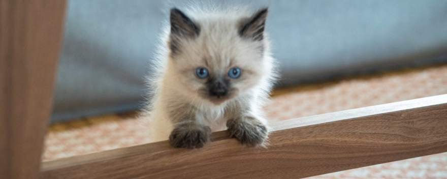 foster kitten 5 weeks old