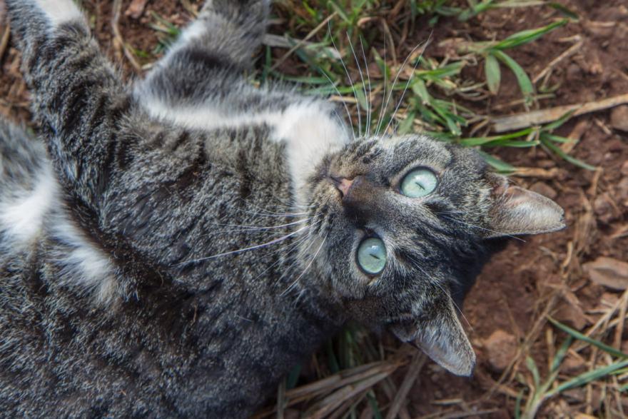 cat sanctuary lanai