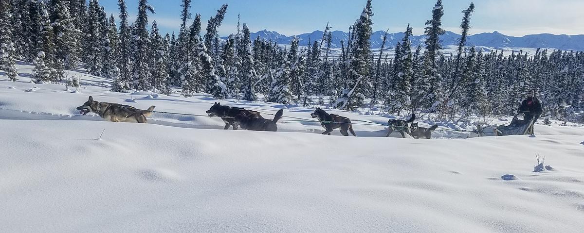 alaska sled dogs denali national park