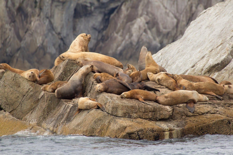 Seward alaska wildlife