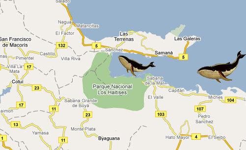 carte baleines republique dominicaine