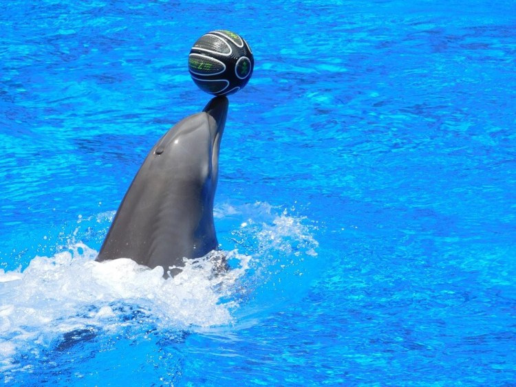 dolphins-1170347_960_720