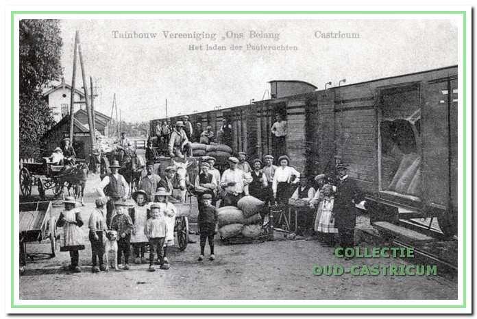 In 1915 ging het vervoer van de peulvruchten van de Tuinbouwvereniging 'Ons Belang ' per spoor.