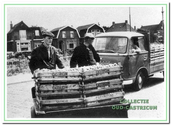 Aanvoer van kisten met aardbeien voor de veiling.