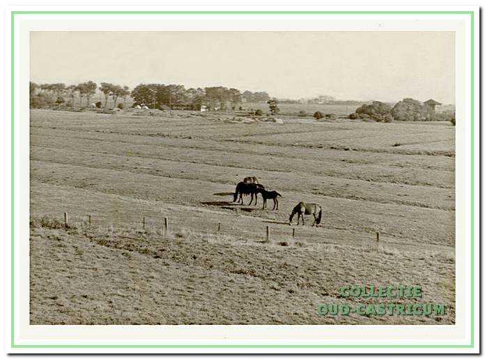 Noordend met uitzicht over de polder.