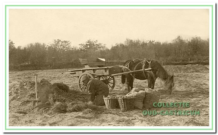 Kees Brakenhoff aan het werk op het land. De kettekar om de manden met aardappelen te vervoeren staat klaar.