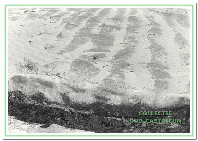 Akkersporen in het verstoven zand in waterwingebied in de duinen.