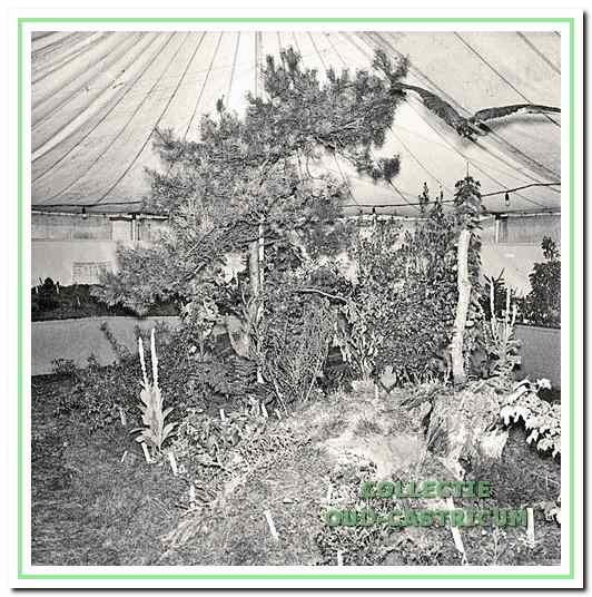 Vele jaren werd in de herfst de grote paddestoelen tentoonstelling gehouden, waarvoor bij Johanna's Hof een tent werd neergezet.