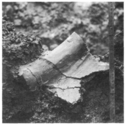 De binnenzijde van een in stukken gebroken randfragment tijdens de opgraving.