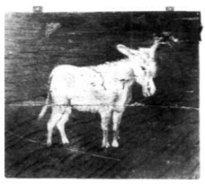 Kinderen werden tot ver in de 19e eeuw flink gestraft, lijfstraffen werden opvoedkundig geacht, de meester werkte ook met andere middelen, zoals dit bord met de afbeelding van een ezel. Het werd om de hals van het domme kind gehangen, als de resultaten van de overhoring niet naar de zin van de meester was. Borden met teksten als 'Domoor' en 'Kwaaddoender' waren ook populair.
