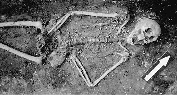 Vrijgelegd skelet van een volwassen vrouw. Ze lag naast een palissade in een greppel.