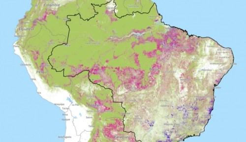 Les gains de la couverture arborée sont représentés en violet (Est) sur la carte, les pertes de la couverture arborée (déforestation, incendies) en rose (Ouest), entre 2001-2018.