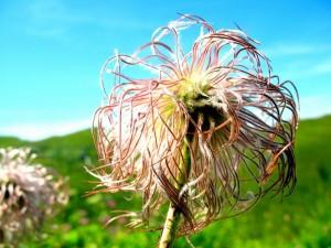 Fleur rOse - (c) 2009 OuiLeO.cOm