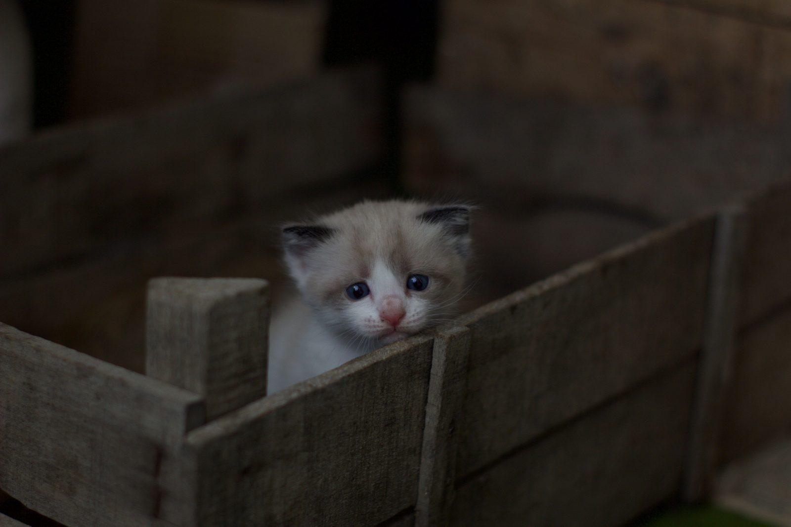 petit-chat-seul-triste-dans-une-boîte