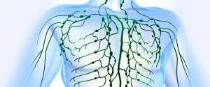 Human Lymphatic system: Structure, Function and Organs